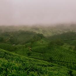 fog-1209215_1920
