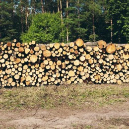 wood, firewood, cut, piled wood, tree trunks